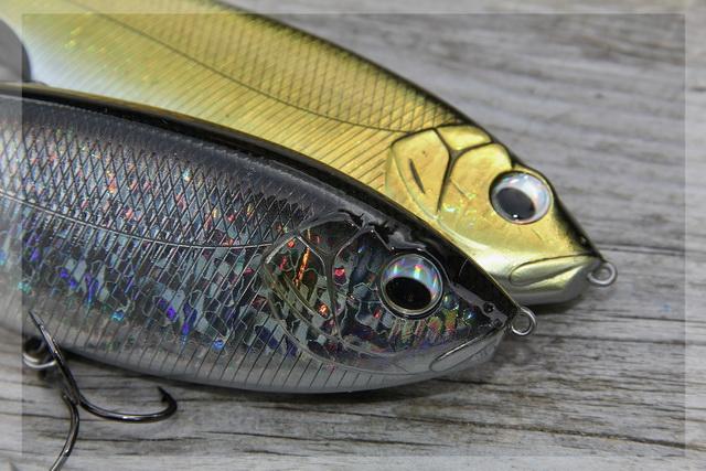 Bolle ogen en reflecterende kleuren , voor het goed opvallen onder water.