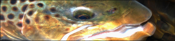 Voor forellenputten waar je de vis niet mag aanraken en weerhaakloos moet vissen een uitkomst.