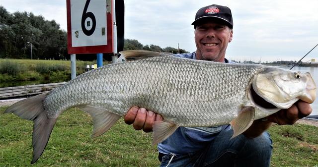 Dikke roofblei, een vis die de 80cm passeert