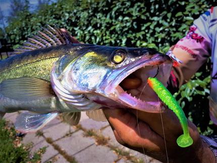 De nieuwe Crazy Fish Nano Minnow, oog voor detail.