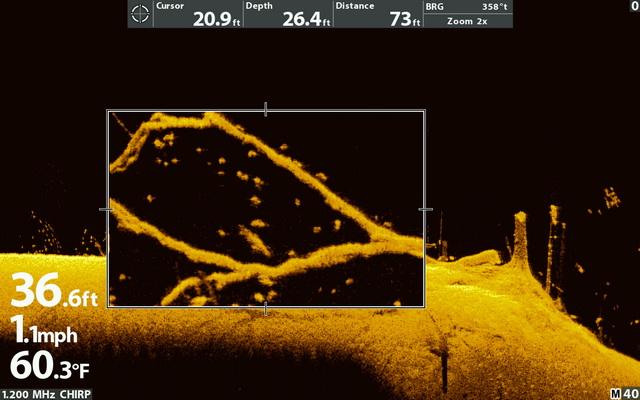 MEGA Down Imaging Plus boom met vis ingezoomd