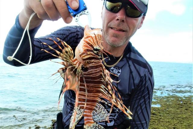 koraalduivel wees voorzichtig