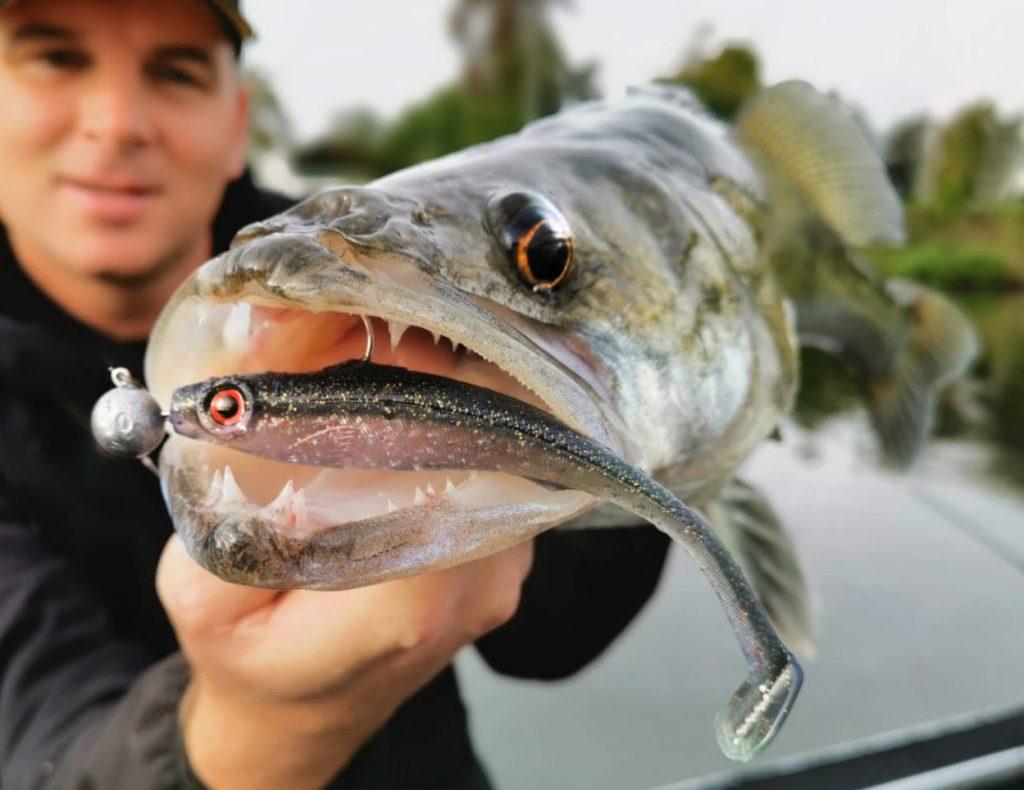 De IRIS Popeye 100 & 120 vormen de ideale snack voor vele roofvissen, 's zomers én 's winters!