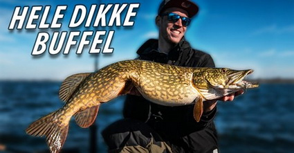 Nieuwe video Fishuals. Hele dikke buffel.