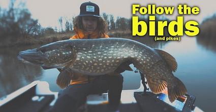 """Nieuwe video Dusk till Dawn """"Follow the birds"""""""