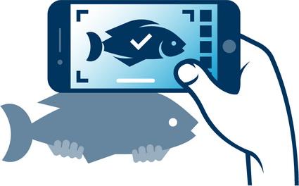 VISsenscanner: vissen herkennen met je smartphone!