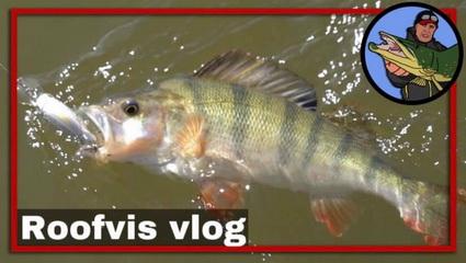 Video 5 TIPS, hoe je succesvol kunt vissen op Roofvis.
