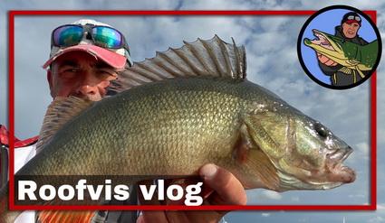 Video nieuwe roofvis stekken zoeken, hoe doe je dat?