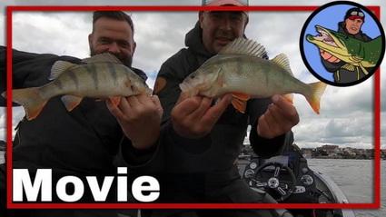 Vissen op Roofvis op de rivier, hoe pak je dat aan?
