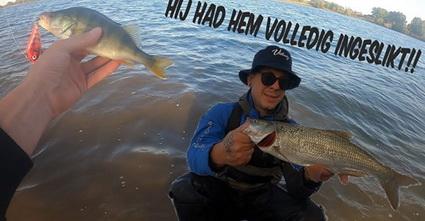 Video vissen op roofblei en baars met Paul.