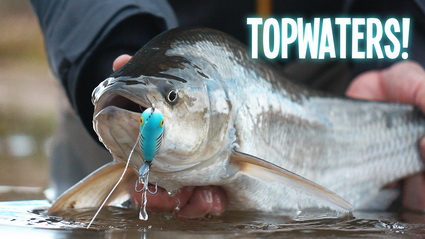 Video VisTD – Topwater Spektakel In Eigen Land (Unieke Beelden!)