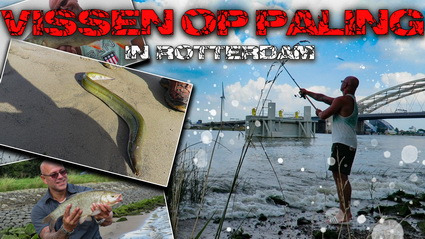 Video Paling Vissen In Rotterdam