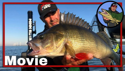 Perch action at pre fishing for Perch Pro 7