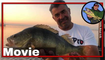 50 CM Perch at Pre Fishing for Perch Pro 7.