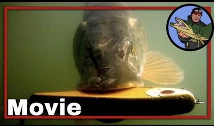 Video Evert Oostdam met unieke onderwater actie!