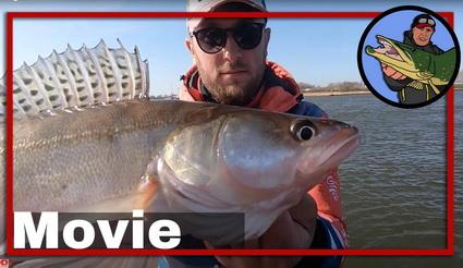 Snoekbaars vissen op de rivier met kunstaas.