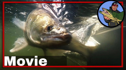 Video compilatie Zander Pro, CWC Fishing Team.